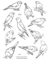 Canaries-A Study of
